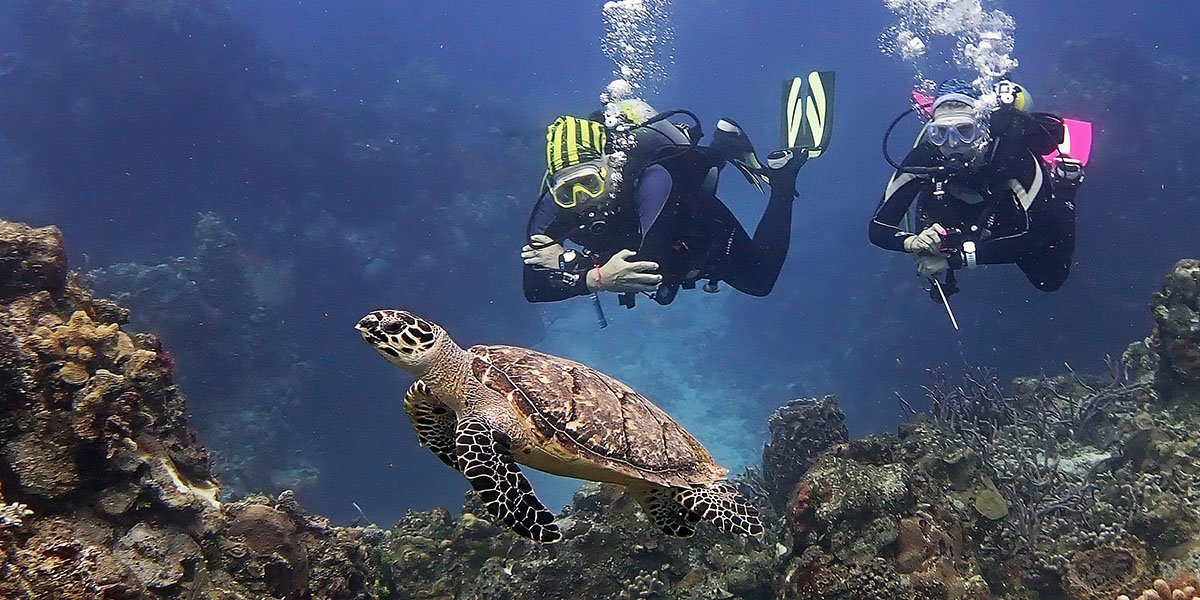 Dive Cozumel with Turtles
